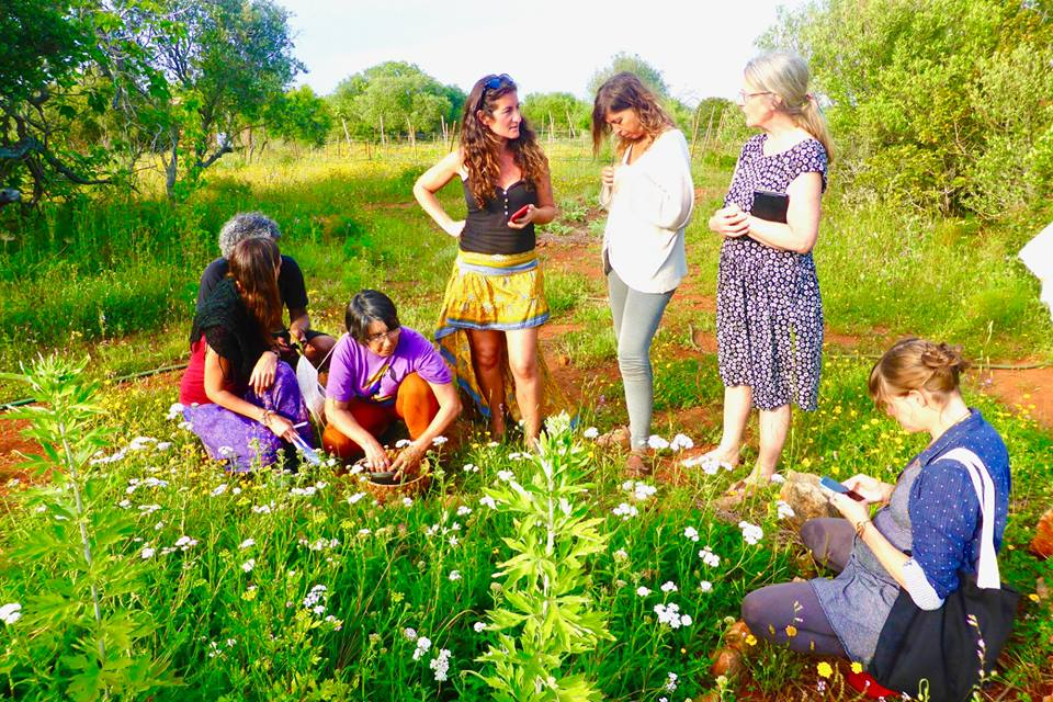 herb walk with artemisia and yarrow