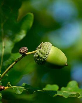 acorn-2555291_1920.jpg