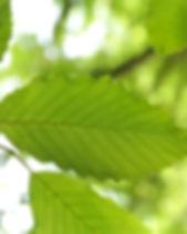 leaf-141627_1920.jpg