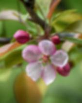 flowers-blooming-4247490_1920.jpg