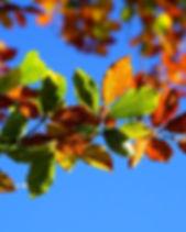 fall-foliage-2822593_1920.jpg