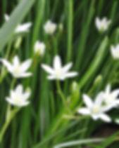 flowers-2492101_1920.jpg