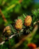cones-614960_1920.jpg