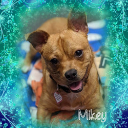 mikey1