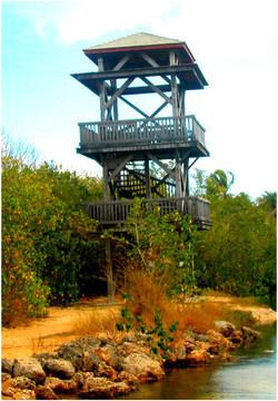 Tour d'observation des marais