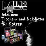 BlackCanyonCat.jpg