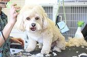 Psi na vlasy