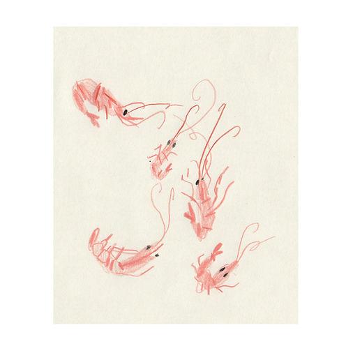 crevettes_carré.jpg