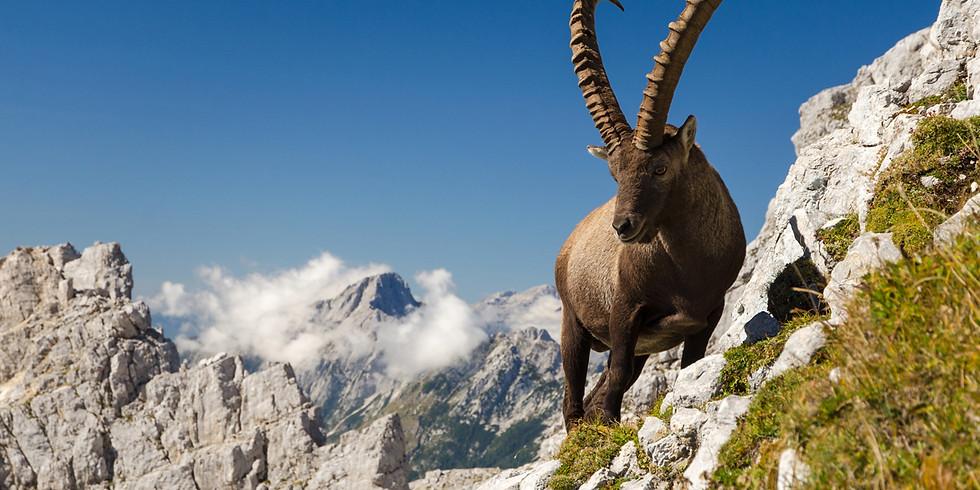 Mahler 4: Back to the Wild