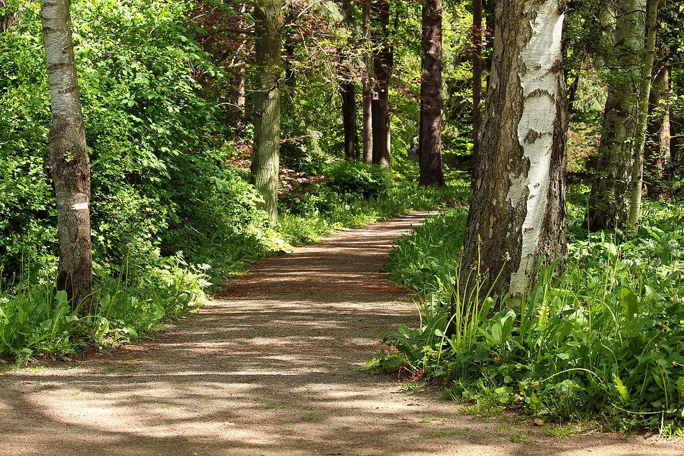 forest-path-4218452_1920.jpg