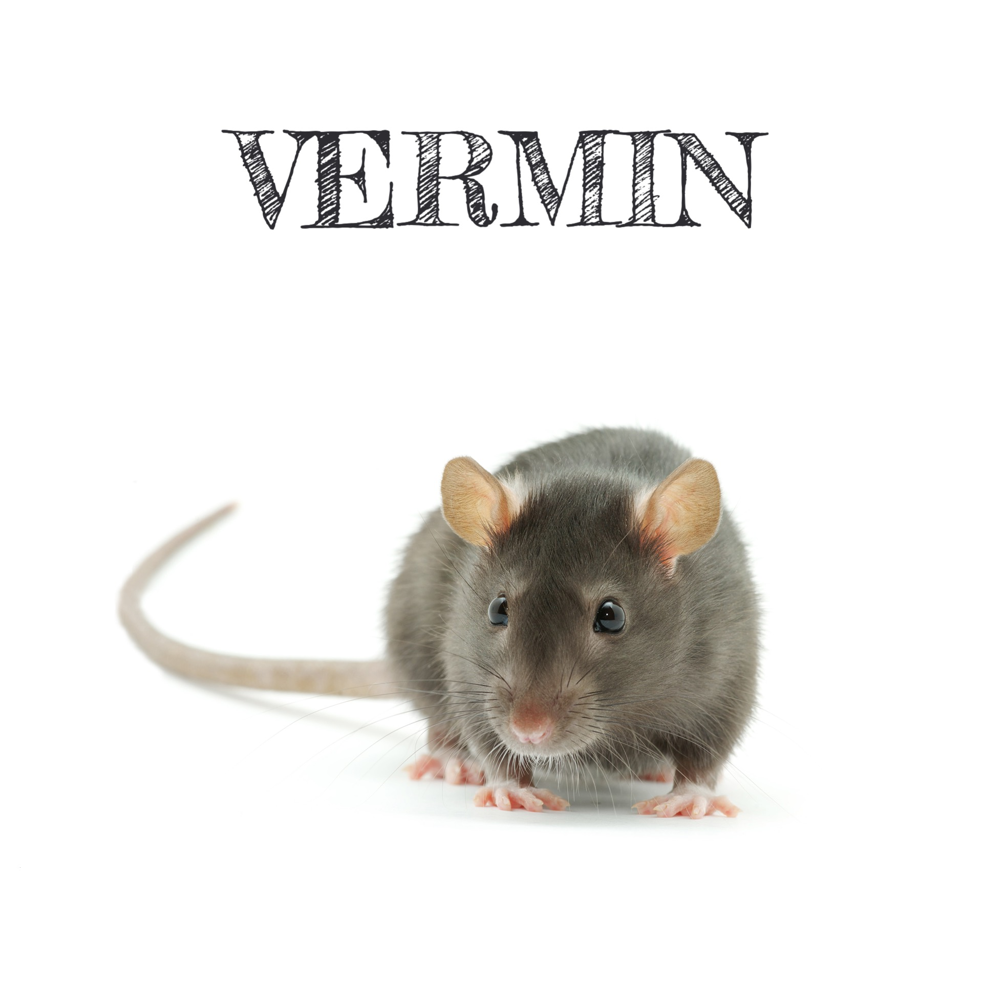 VERMIN control uk