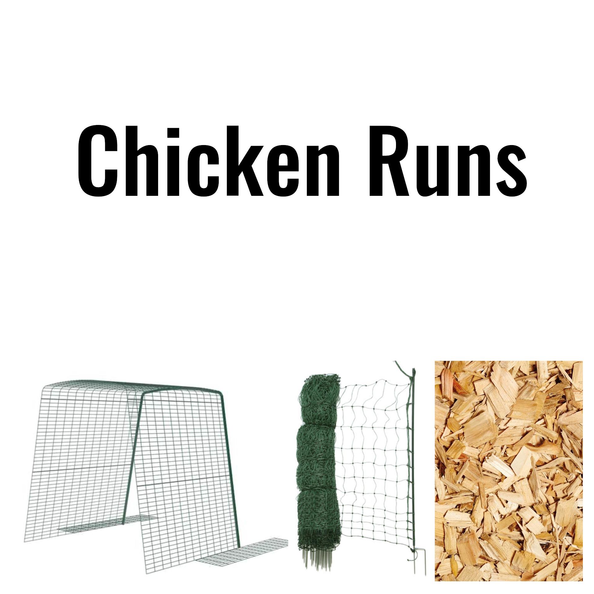 Chick runs