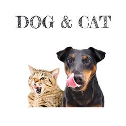 DOG AND CAT uk