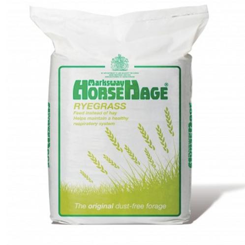 Horsehage Ryegrass