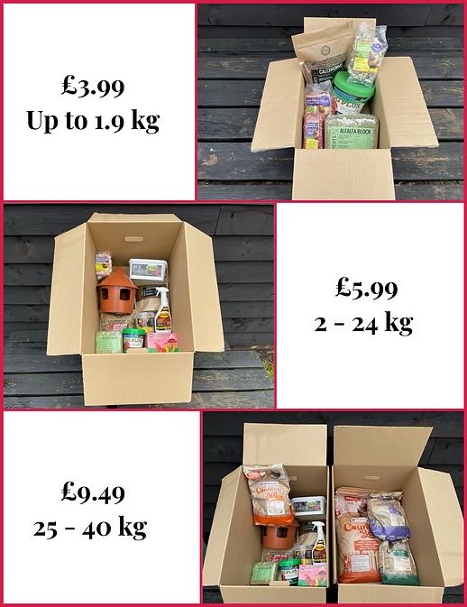 shipping light box grpahic .png