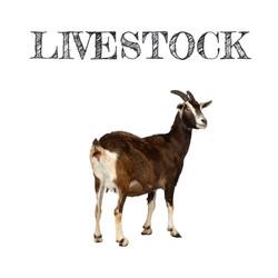 LIVESTOCK uk