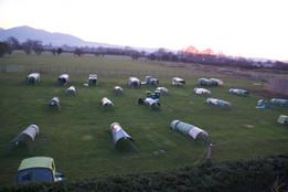 Chicken Boarding Field