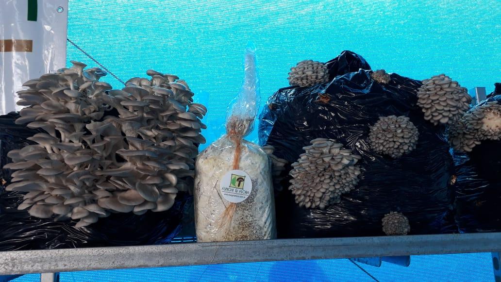 Funghi & Flora na Hortitec