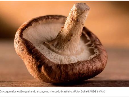 A ascensão dos cogumelos: benefícios e como escolher e usar