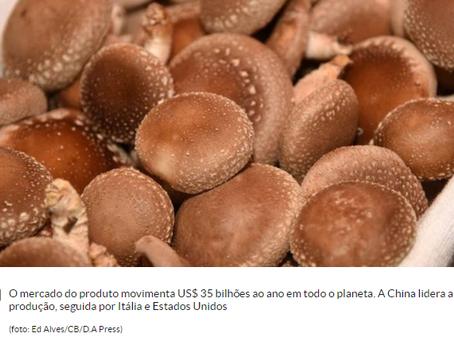 Agronegócio: Consumo e produção de cogumelos cresce no Brasil
