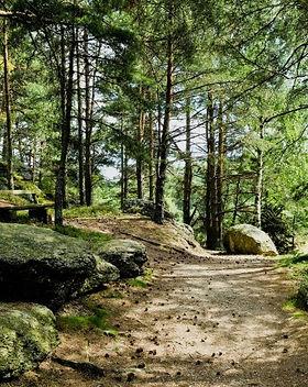 naturpark-nordwald.jpg
