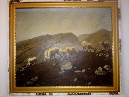 BK114 - weidende Schafe