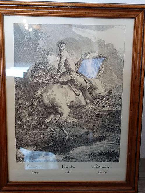 BK167 Original Radierungen Pferde Succufsatio a Dextris in Circulo Largo