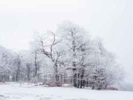 Wintertraum im Zauberwald