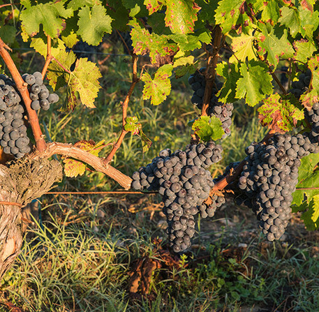 Our Red Wines