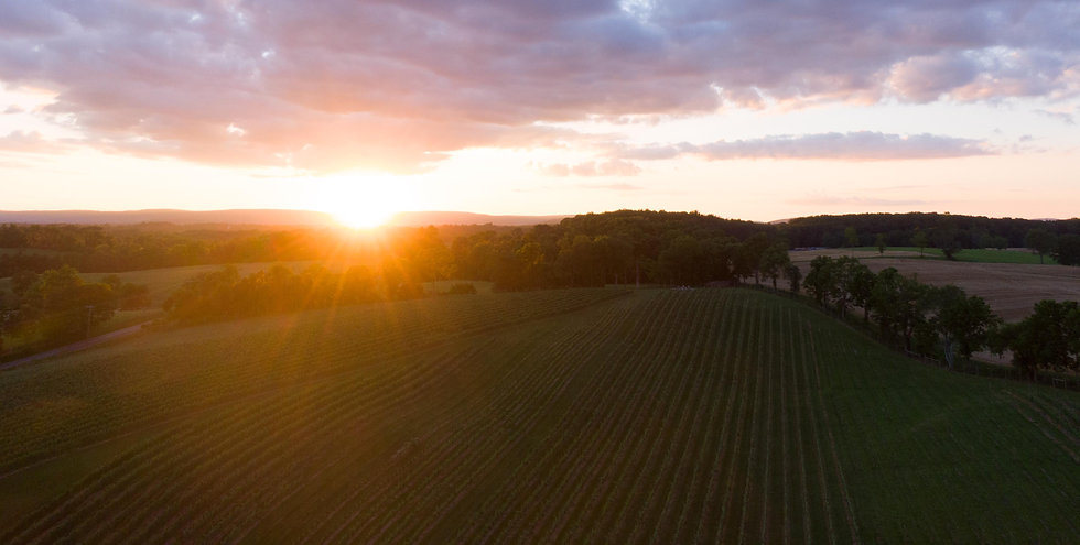 Vineyard Sunset .jpg