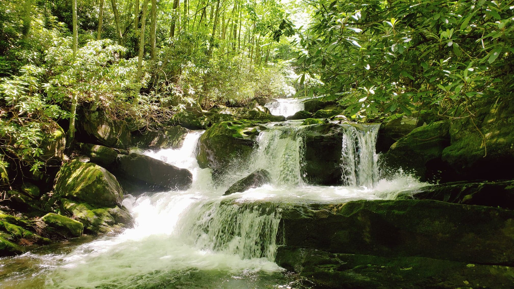 Lynn Camp Prong Cascades