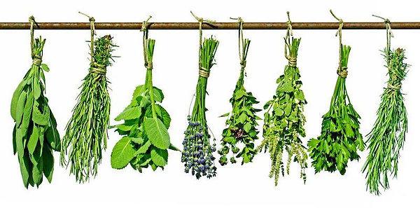 herbal banner.jpg