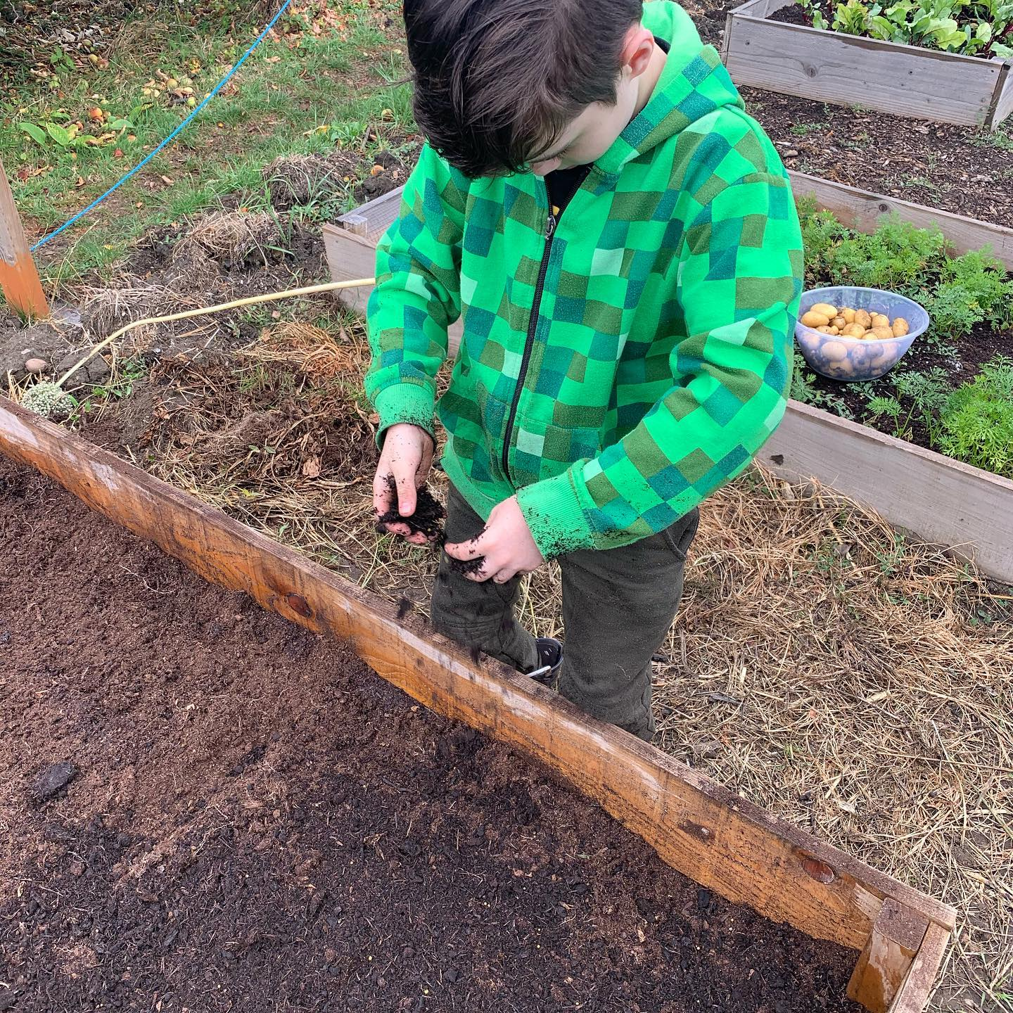 prepping the carrot bed