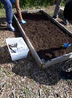 preparing seed bed 2