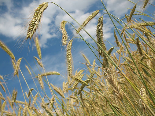 cereals-228726_1920.jpg