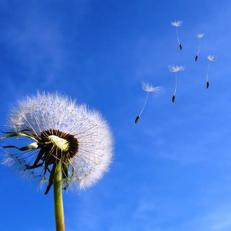 אלרגיות-איך להתמודד בטבעיות?
