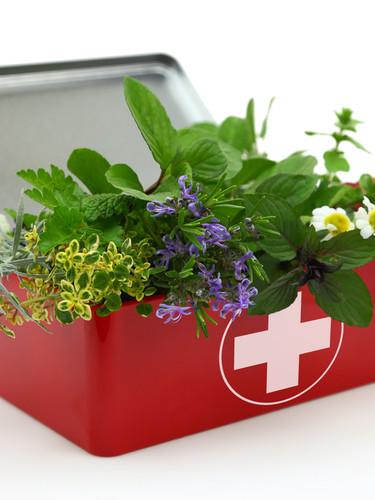 צמחי מרפא.jpg