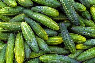 cucumber stock image.jpg