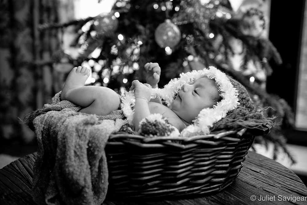 Newborn baby in basket with Christmas tree