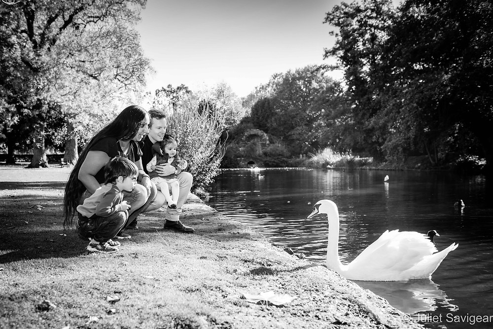 Family watching swan by lake