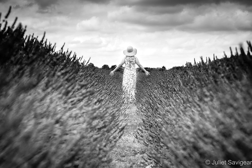 Walking through the lavender field