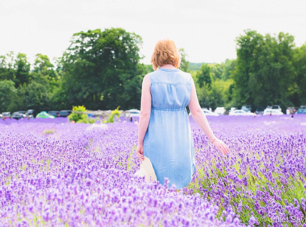 Walking Through The Lavender Feilds