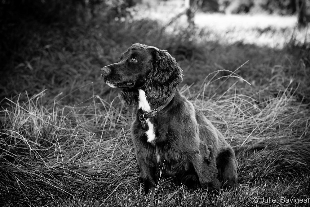 Pet Photography - Putney - Dog