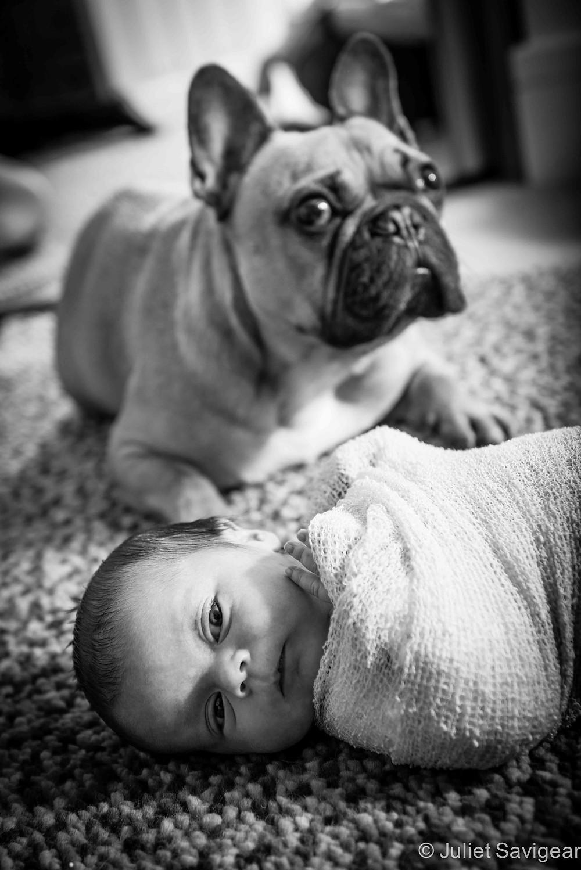 Baby & The Family Dog - Newborn Baby Photography, Balham