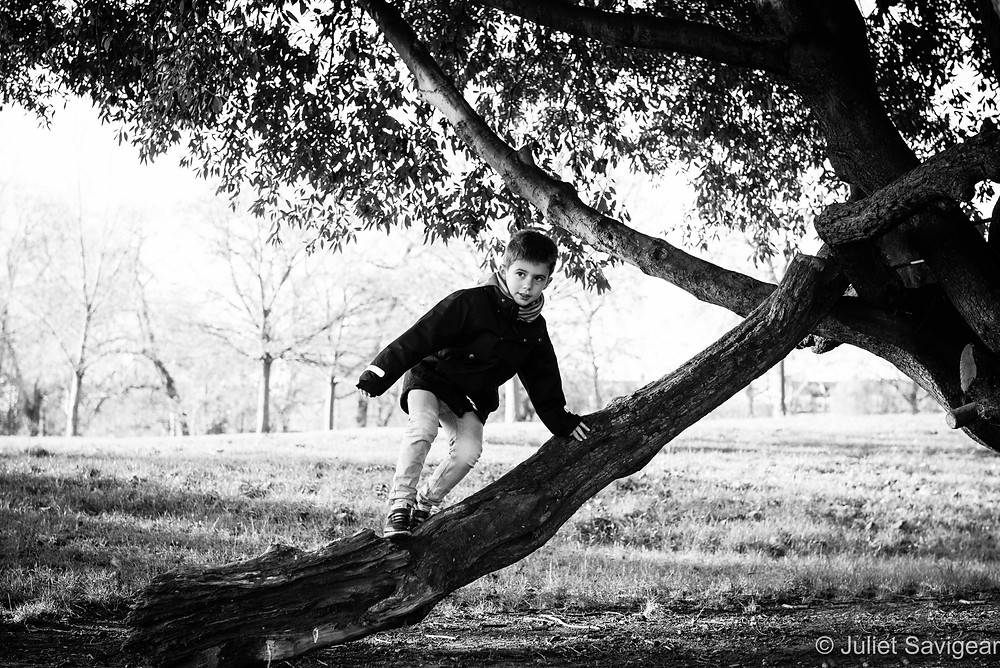 Tree climbing on Clapham Common