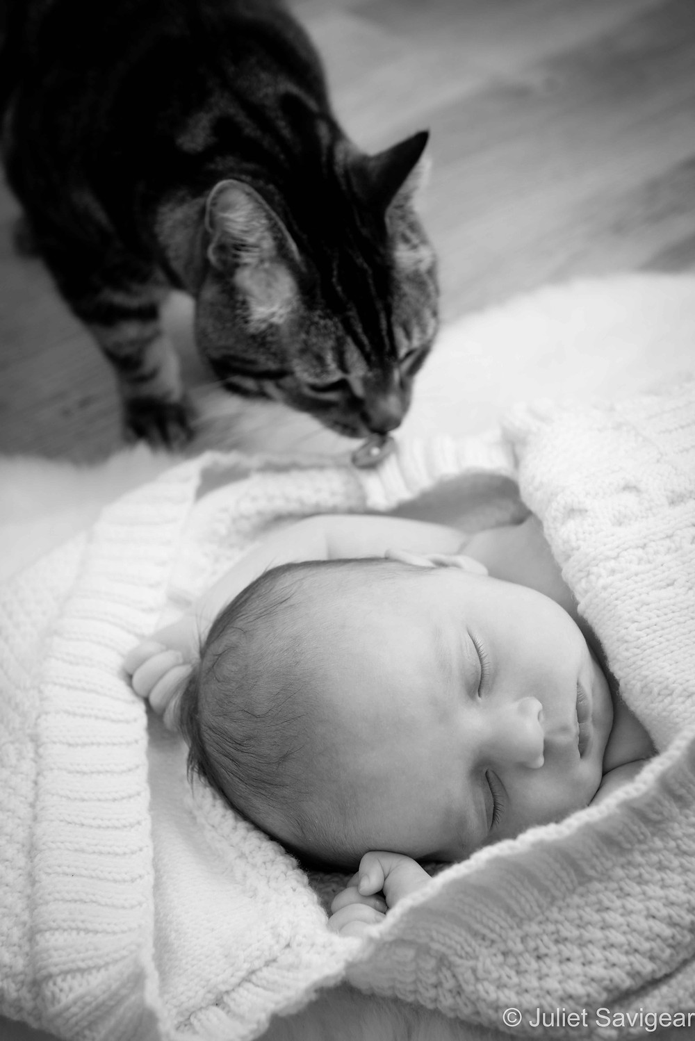 Baby & Pet Cat - Baby Photographer, Leyton