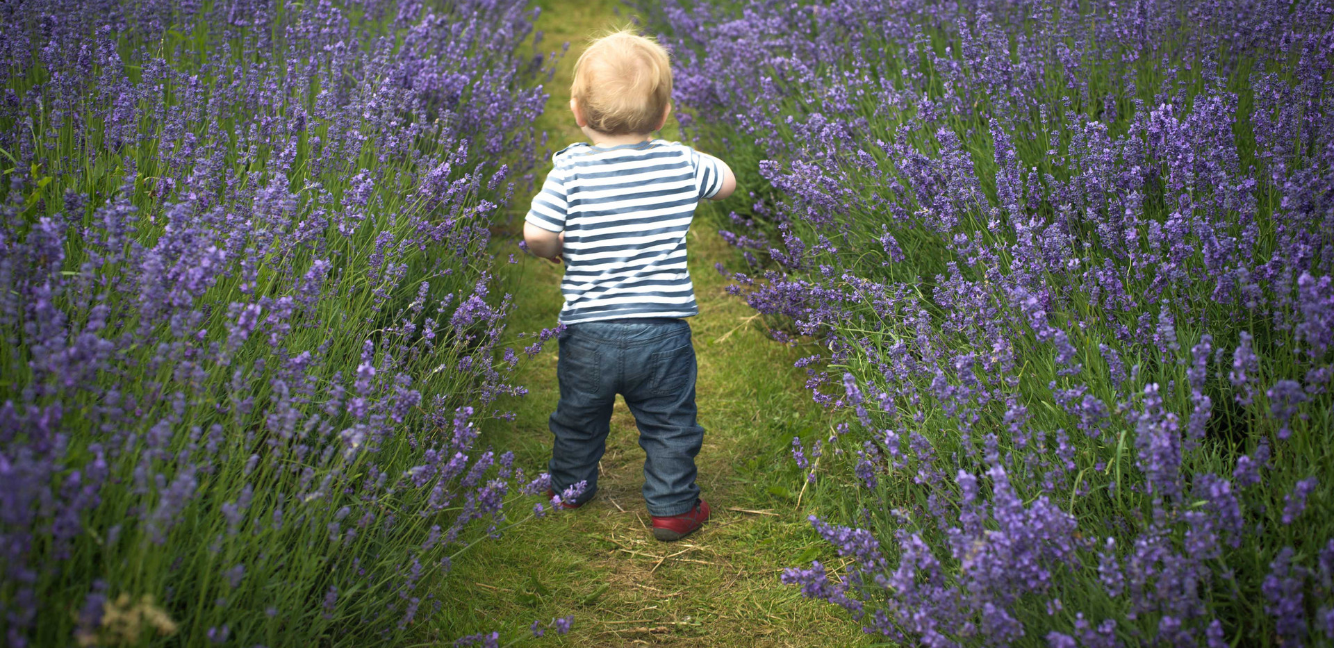 Toddler Through The Lavender