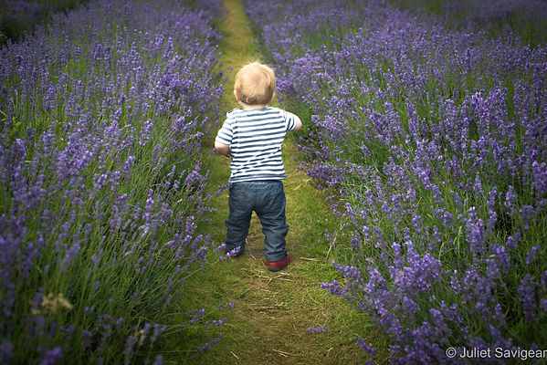 Toddler Among Lavender Flowers