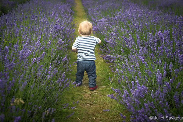 Toddler Among Lavender Flowers