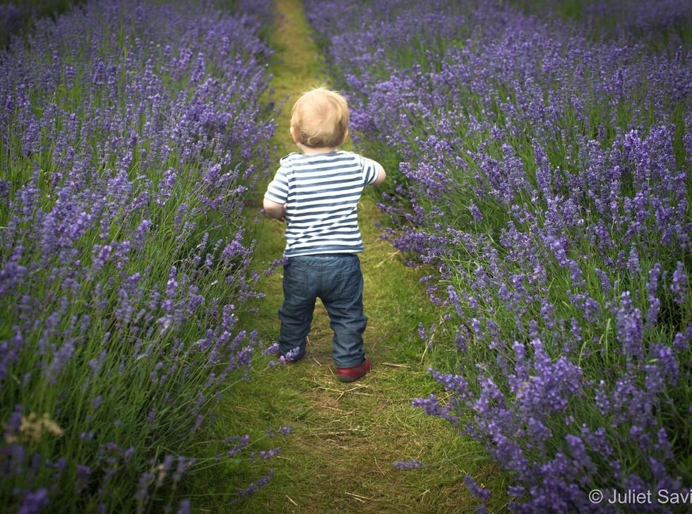 Toddler Through The Lavender